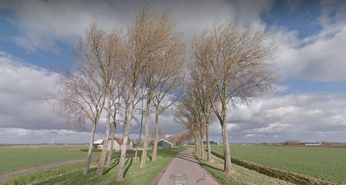Deze en nog een kleine 80 andere bomen moeten wijken langs de Drieëndijk.