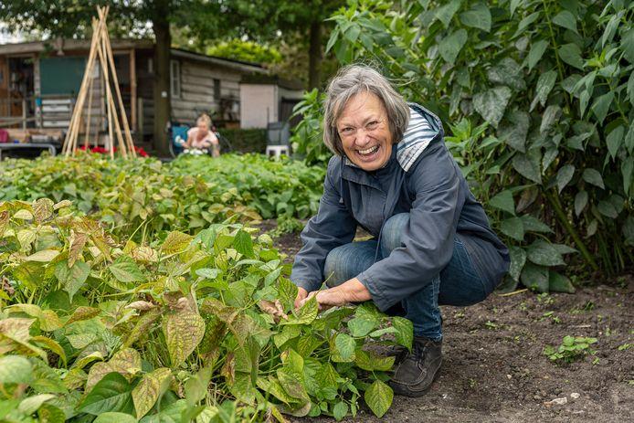 """Marianne Maat plukt bonen in de Stadstuin. ,,Ik ben hier na mijn pensionering begonnen."""""""