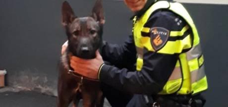 Hond uit Hongarije achtergelaten in Boxtel
