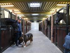 Van Olst Horses in Den Hout stoomt amazone Charlotte Fry klaar voor de Olympische Spelen