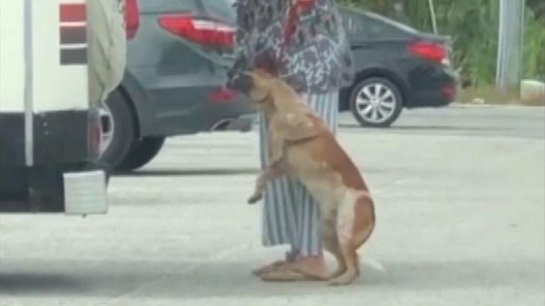 De hond stikte bijna in zijn leiband.