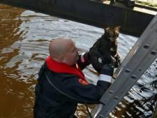 Kletsnatte kat gered uit Langegracht in Amersfoort