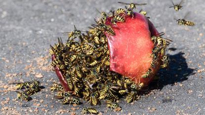 """Waarom we bijen beminnen maar wespen haten: """"Onterecht"""", volgens experts"""