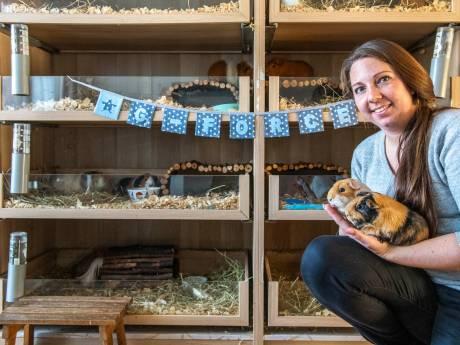 Weldoeners melden zich voor  cavia-opvang van Audrey in Hulst