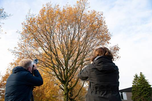 Vogelspotters bij de 'roestplaats' van de ransuilen in Nijmegen-Oost.