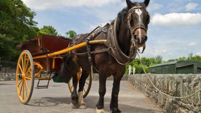 Uitgeput paard sterft nadat het toeristen moest rondrijden bij 36 graden