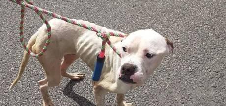Getouwtrek rond drie verwaarloosde honden: Het waren skeletten, vel over been