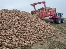 'Luizenbestrijdingsleger' moet suikerbieten beschermen