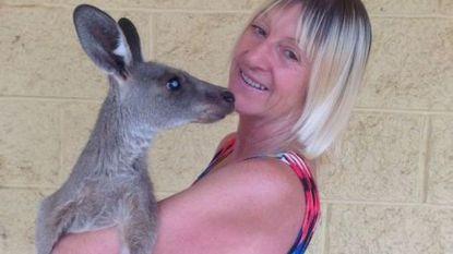 Australische gewond na aanval kangoeroe