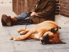 150 jaar hondenbelasting in Dordrecht