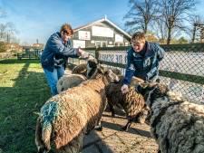 Abtswoudsepark gered, nu alleen nog terrein van kinderboerderij in beeld voor bouw van megaschool