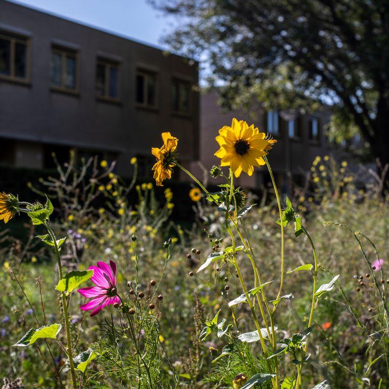 Het bloemenlint in Noord. Beeld Lin Woldendorp