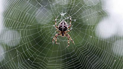 Spinnen verslinden tot 800 miljoen ton insecten per jaar