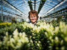 Tuincentra doen buxus in de ban vanwege mottenplaag