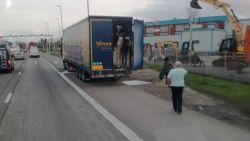 Illegalen springen uit vrachtwagen langs A12: al tien personen opgepakt door politie