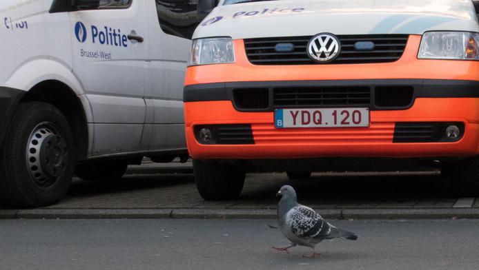 Pigeonné!
