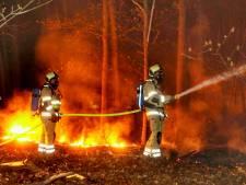 Groot brandgevaar in kurkdroge bossen: 'Mensen, gebruik alsjeblieft je verstand' <br>