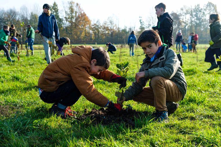 Mensen genoten van het mooie weer om bomen te planten.