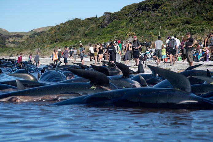 Honderden vrijwilligers probeerden de dieren te helpen.