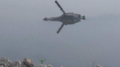 Alligator met groot keukenmes in zijn kop beroert Texas