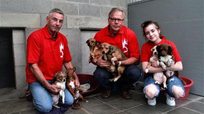 Dierenasiel krijgt twintig extra honden