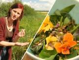 Wildplukken met Marjolein: 'Pluk je tuin leeg en maak er stamppot van'