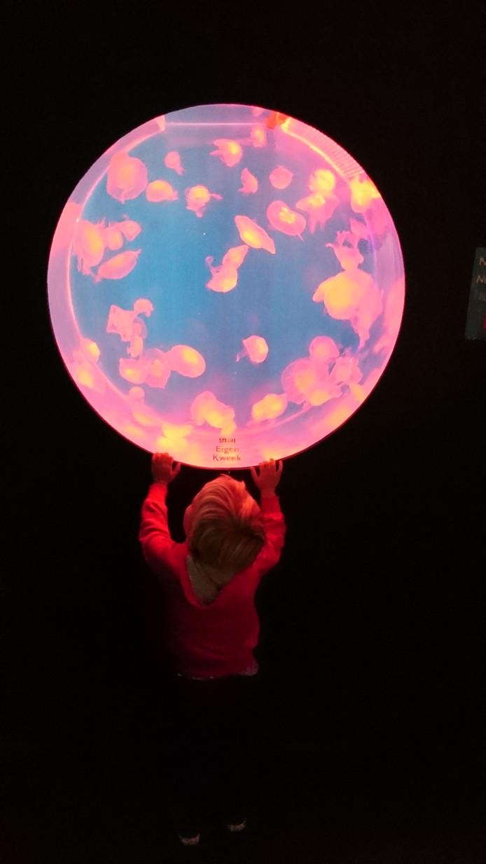 Weekwinnaar (3): Oh, wat mooi. Is het een filmscène of misschien een reclameposter? Nee, gewoon een kind in Scheveningen dat zich vergaapt aan een halve aquariumbol met kwalletjes in Sealife. ,,Wat is de wereld toch bijzonder'', verzucht Jacques van der Kooi uit Hoek van Holland, de maker van de foto.