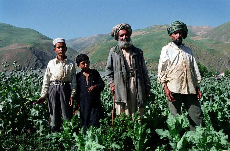Boer Nazir Mohammed (tweede van rechts) met zijn 12-jarige kleinzoon Qadratullah (links naast hem) bij het oogsten van de papaver in 2004 in de provincie Badakshan. Beeld robert knoth