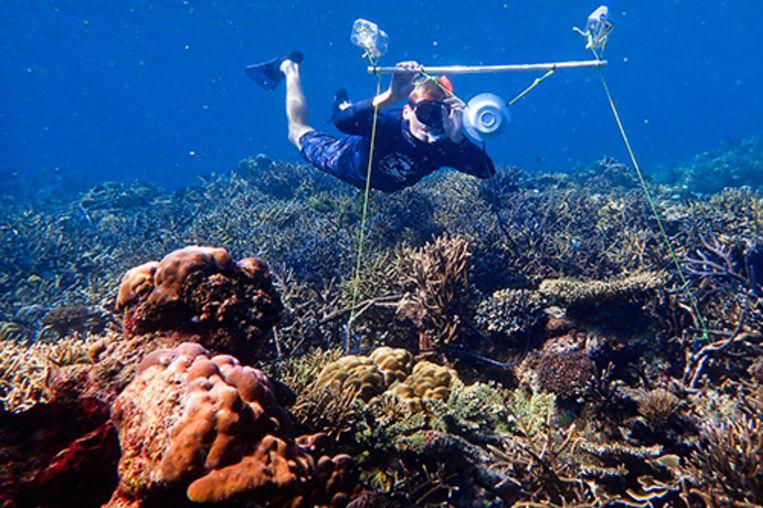 Onderzoeksleider Tim Gordon plaatst een luidspreker in het midden van het beschadigde koraal.
