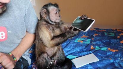VIRAL3: Als een aapje een iPhone X uitpakt