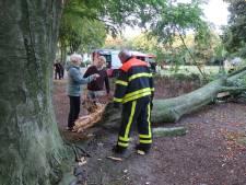 Vrouw en hondje kunnen nét opzij springen voor enorme tak die boven hen afbreekt in Oosterhout