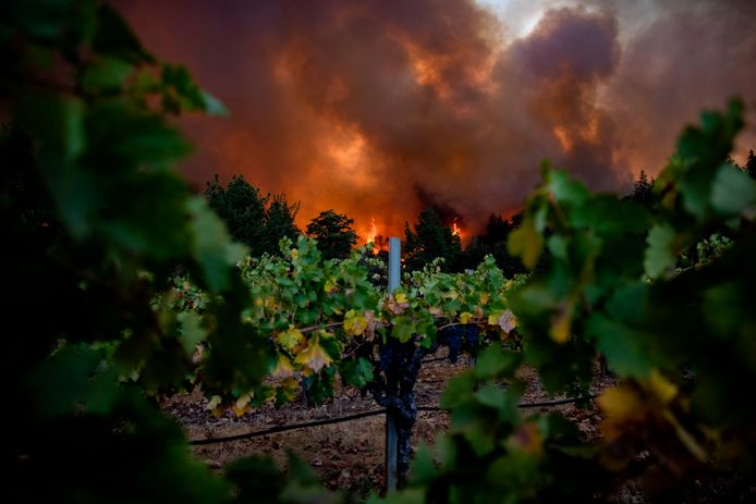 Merus Wines, Napa Valley