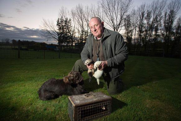 Jager Jos Mignolet zal op en rond de terreinen zijn fretten inzetten om de konijnenplaag de bekampen.
