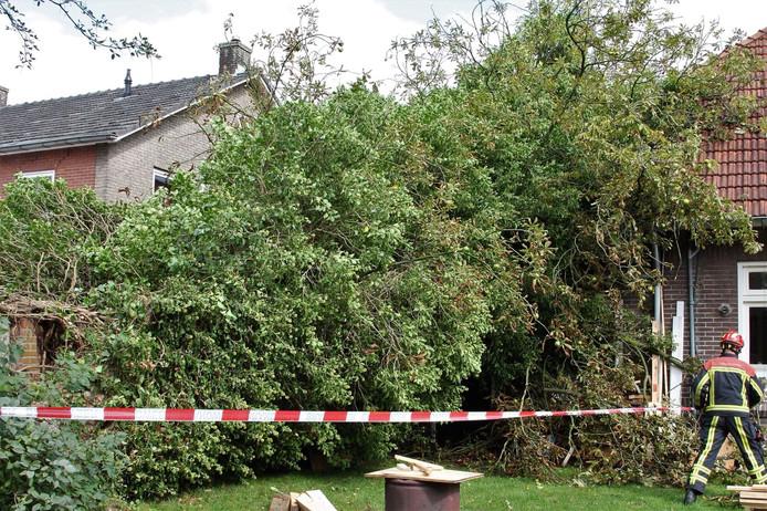 De omgevallen kastanjeboom.