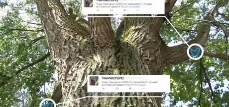 Twitterende boom heeft een  zware week achter de rug
