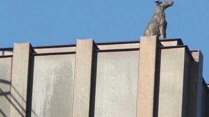 Bronzen hond overschouwt Gent van op Boekentoren