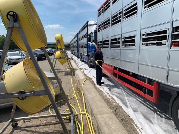 Bij VION in Boxtel worden de vrachtwagens met varkens koel gehouden door middel van grote ventilatoren en wit zeil op het asfalt welke nat gehouden wordt.