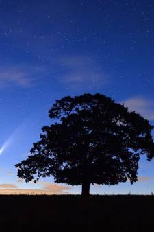 """La comète """"Neowise"""" et son brillant panache visibles à l'œil nu cet été"""