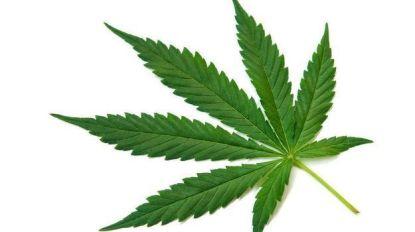 """Twintiger riskeert acht maanden cel voor bezit en verkoop van wiet: """"Cannabis helpt beter voor mijn ADHD dan medicatie"""""""