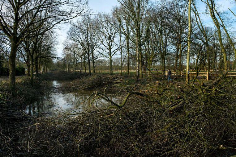 De Vlaamse Milieu Maatschappij snoeide veel bomen en struiken aan de antitankgracht.