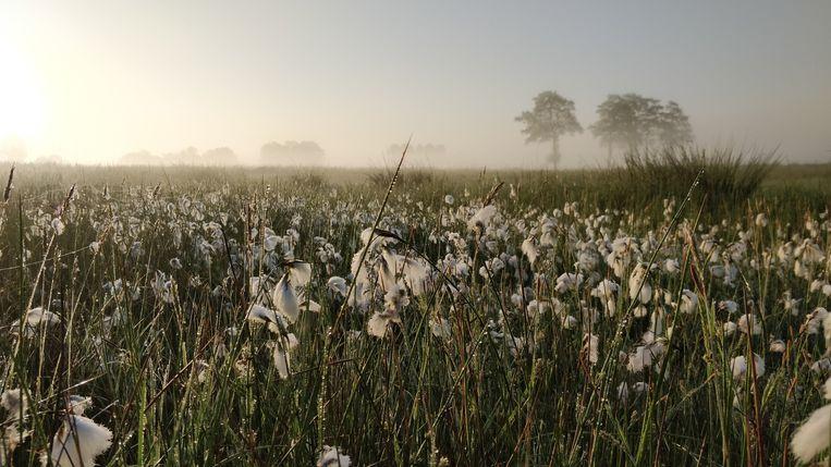Natura 2000 gebied Binnenveld, één van de kleinste natuurschatten.  Beeld Patrick Jansen