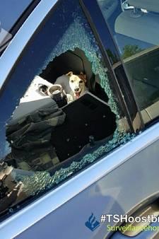 Hond uit snikhete auto gehaald in Eindhoven