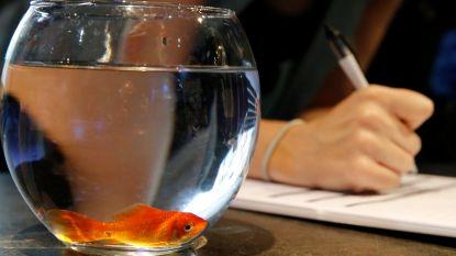 Goudvis beu? Breng hem naar het aquarium in Parijs