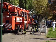 Brandweer haalt papegaai Kwikkie uit boom in Waalre