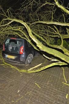 Veel meldingen van stormschade in de regio: één gewonde door omgevallen boom