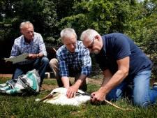 Niet alle ooievaars van opvang in Herwijnen zijn weggevlogen