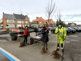 Torhout deelt gratis bomen en honing uit