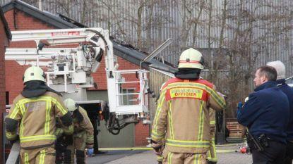 Honderd sierkwartels sterven in brand in loods