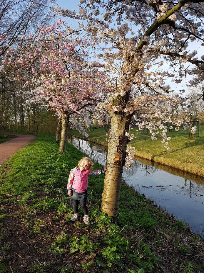Sarina van Ettekoven geniet van de bloesempracht in het Laningpark in Oud Beijerland.