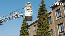 De brandweer rukt uit voor een poes in een boom, maar ze is hen te slim af